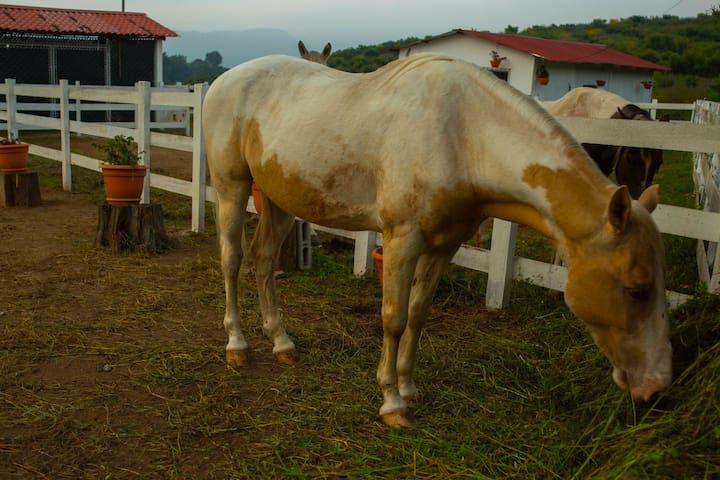 You can have horse rides in our farm. Perfect for the kids! (Puedes tener paseos a caballo en nuestra finca. ¡Perfecto para los niños!)