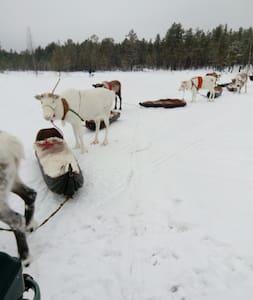 Sami Homestay - Jokkmokk - Hus