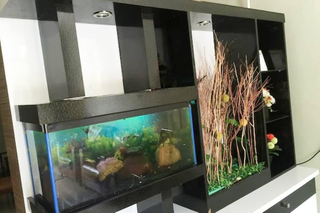 the aquarium view