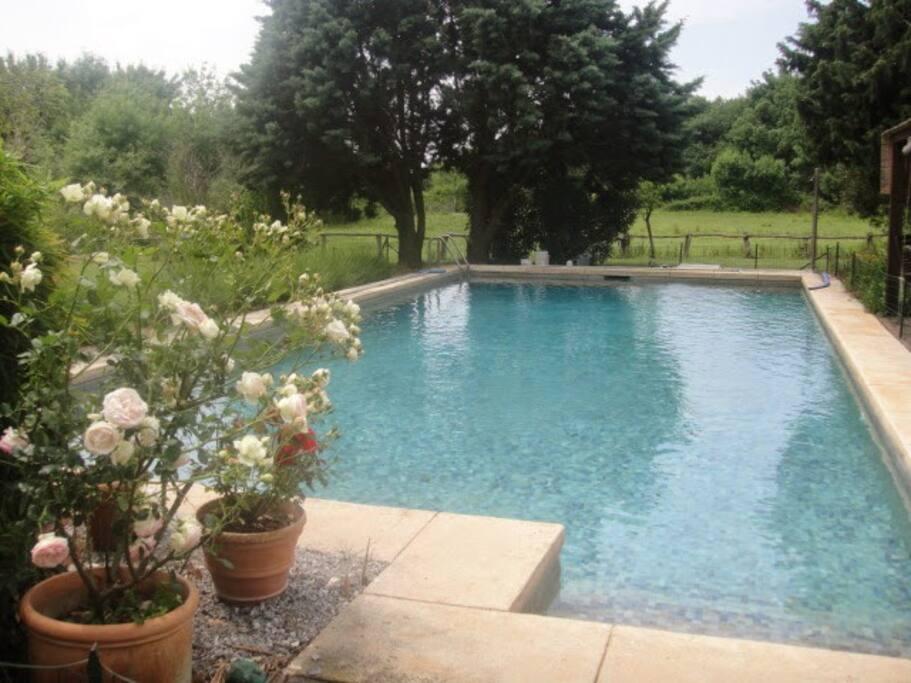 La piscine se trouve entre le Mas et l'étang