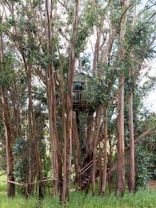 Tree House Swallowtail Magic Grove - Petaluma - Puumaja