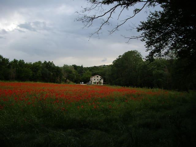 """Farm  """"Il Pagliaio del monaco"""" - Montagano - Oda + Kahvaltı"""