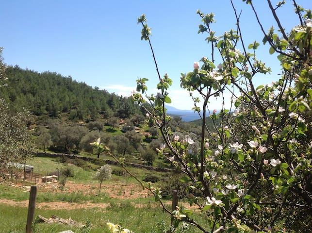Doğa ile başbaşa huzur ve saglık - Bodrum - Vila
