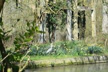 Herons,water fowl,wild ducks,Barbary ducks,nutria,kingfishers,woodpeckers.