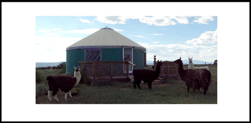 Llammas are always nearby and are in charge of weed control. The interior of the yurt is surprisingingly light, spacious and beautiful to look at. Mountain views of every mountain in northern  New Mexico are available from the front  and back porches.