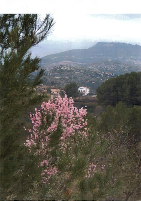 Entre MER (10 min) et au pied de la montagne de PRADES