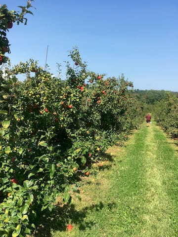 and apple picking!