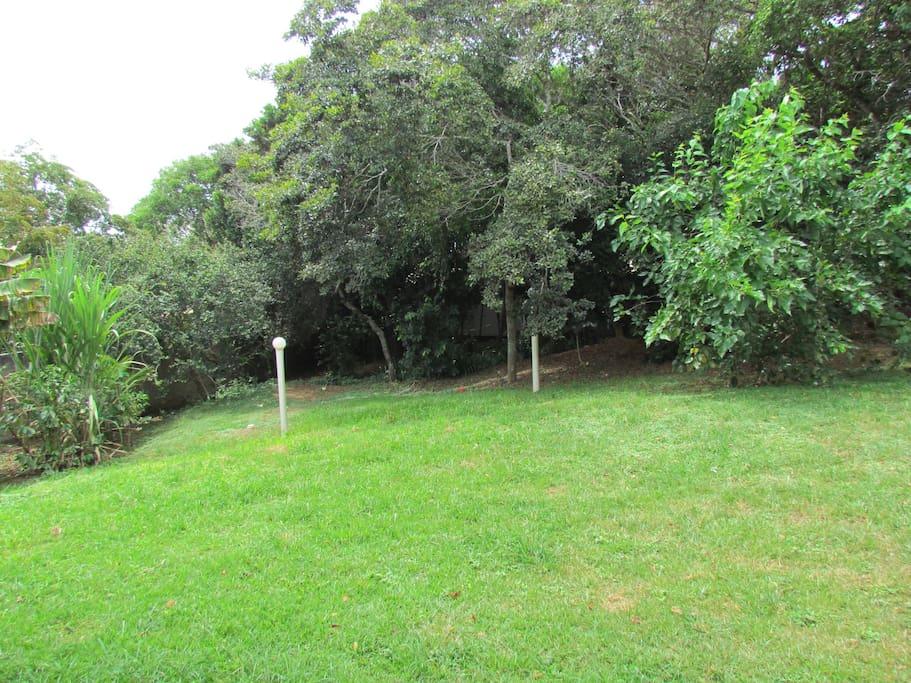 Quintal com gramado