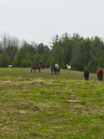 Accomodation on horse farm in house  Smoking  home - Kawartha Lakes - Asrama