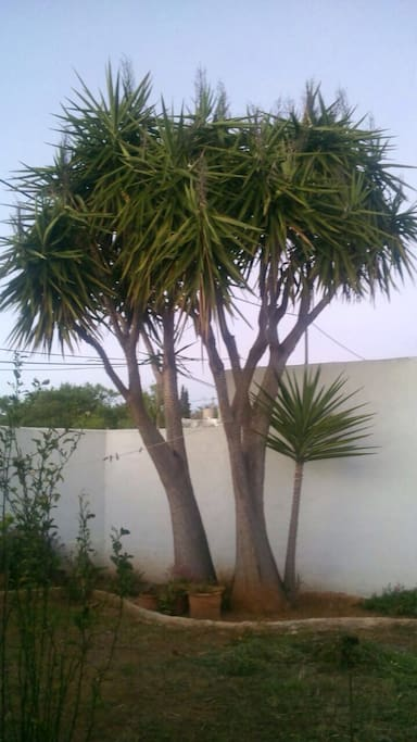Typical plant