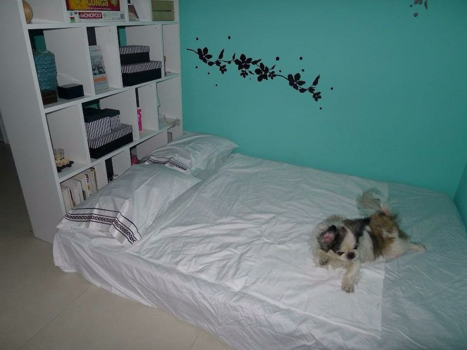 Queen size bed on the floor. Dog is not included in your rental!