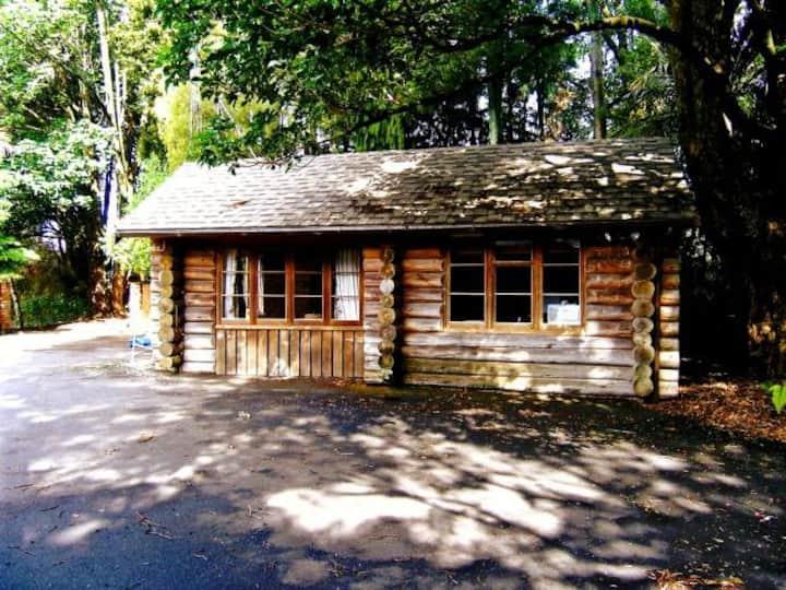 Log Cabin nestled in NZ native bush
