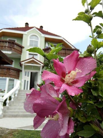 Hibiskus-Appartementhaus Nähe Heviz- 4 mal buchbar - Cserszegtomaj - Guesthouse