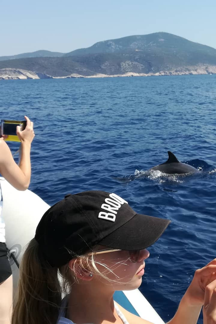 Dolphins are usual sight on our tour
