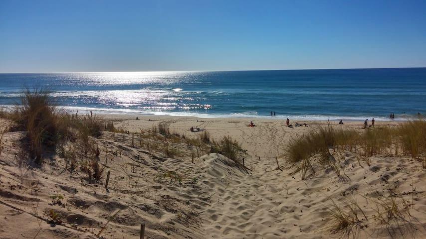 L'océan et les plages de sable fin sur 300 kilomètres.