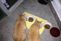 Feeding Leo and Romeo in my Quarters-Mostly Outdoor cats
