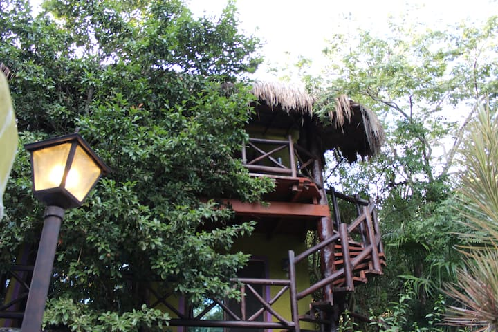 Chalet tree . Admire the jungle.