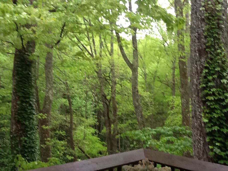 Deck view of forest