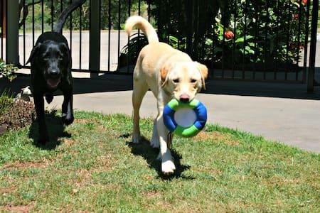 Pet Friendly Accomodation Kingsclif - Duranbah - อพาร์ทเมนท์