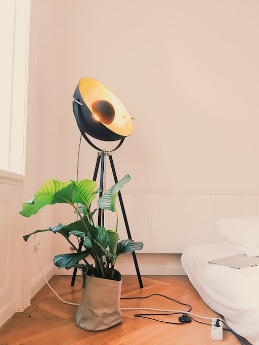 this lamp brings golden light into my room and my plant loves its place at the window
