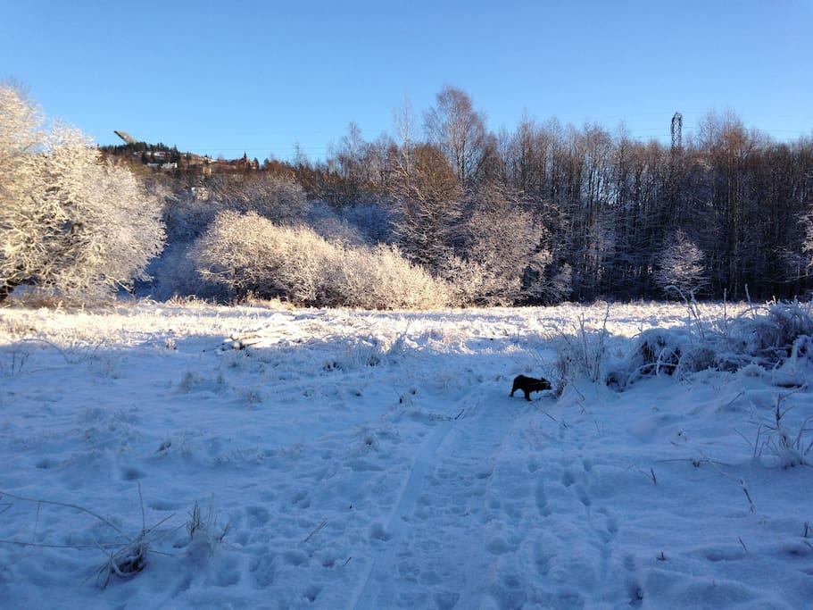 View from backyard to Holmenkollen