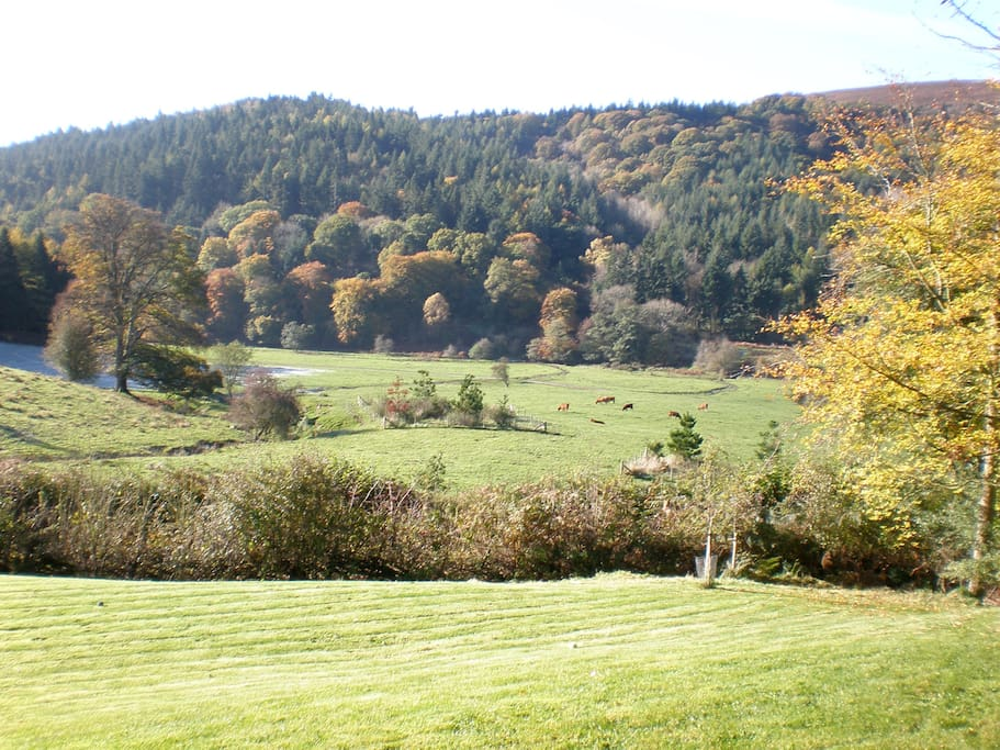View of Linley Big Wood
