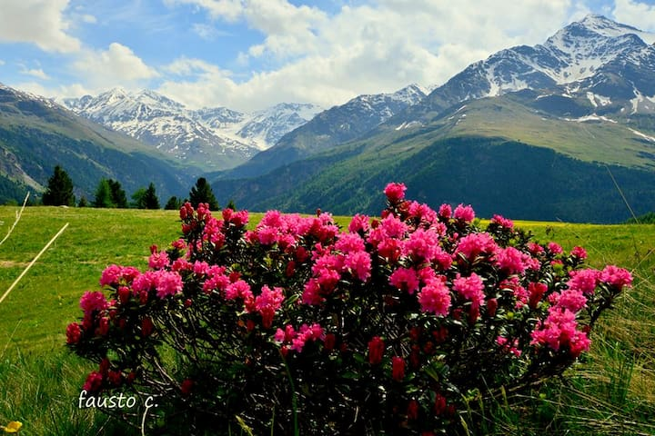 Un sogno in montagna a Bormio - Valdidentro - House