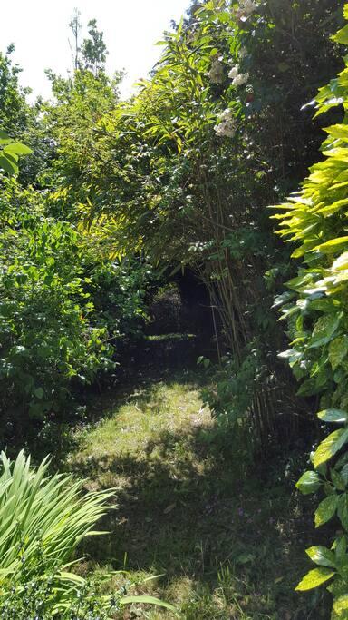 Le parc ombragé face a la maison