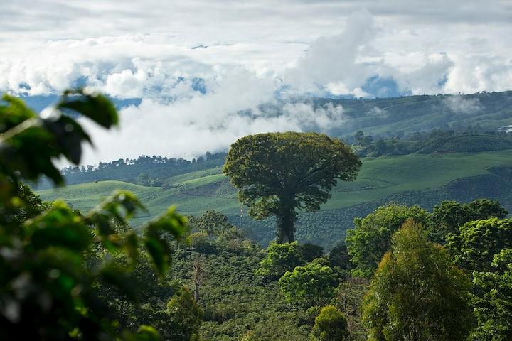 Our Ceiba Tree