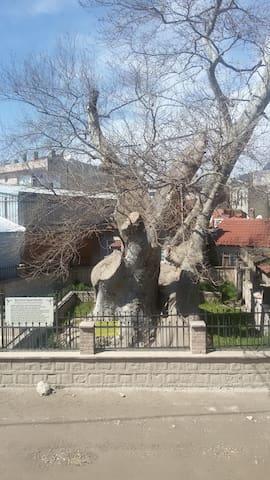 Ulu Çınar Karşısında Ahşap Kagir Ev - İznik