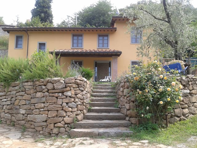 Luxury Farmhouse with swimming pool - Pescia - Villa