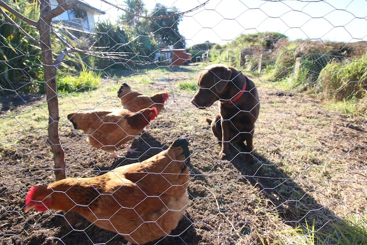 The Red Hen And Dog