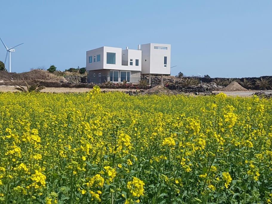 Jeju Palmhouse | 제주팜하우스