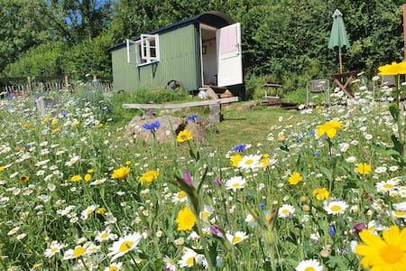 Romantic, peaceful Shepherds Hut