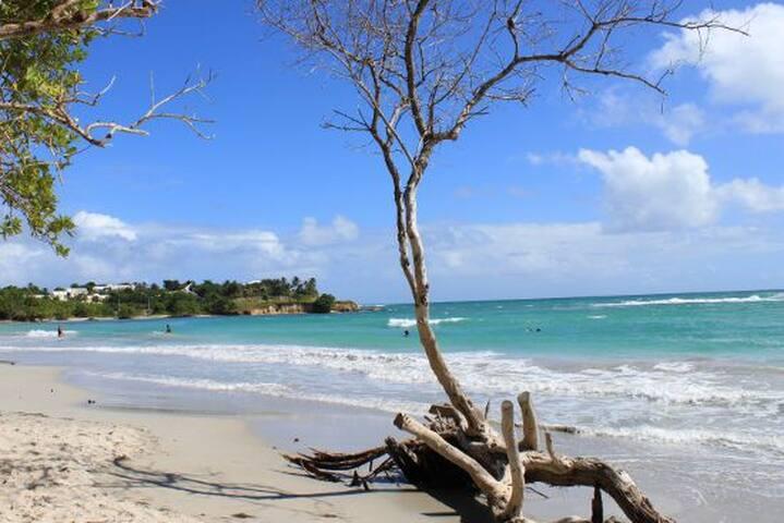 T2 Ti Colibri - A deux pas de la plage