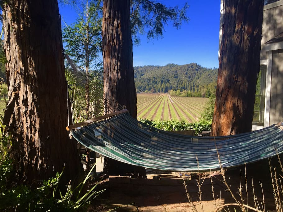 Hammock under the redwood grove