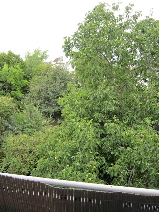 Blick ins Grüne vom Balkon