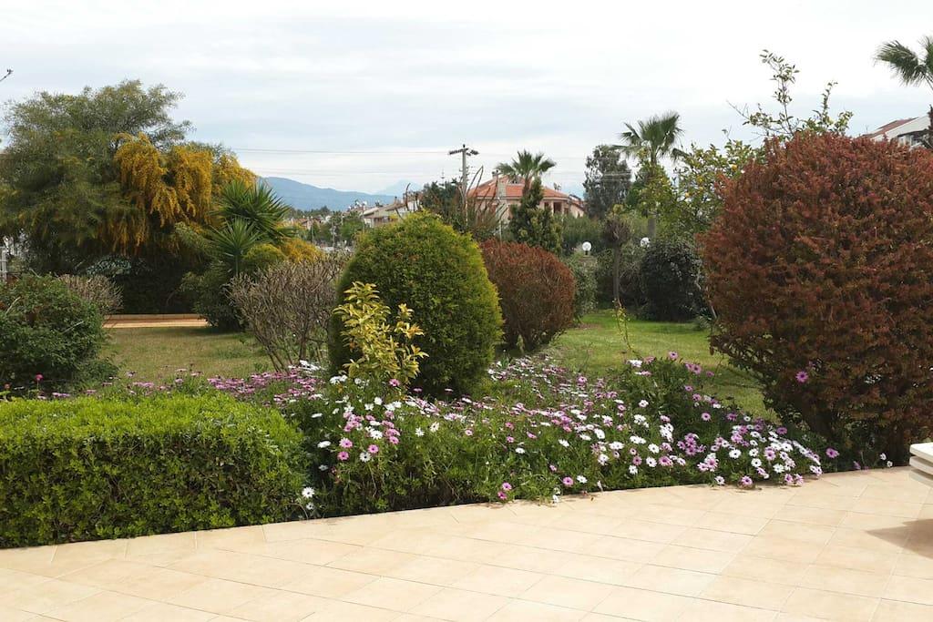 Сад комплекса. Garden of complex