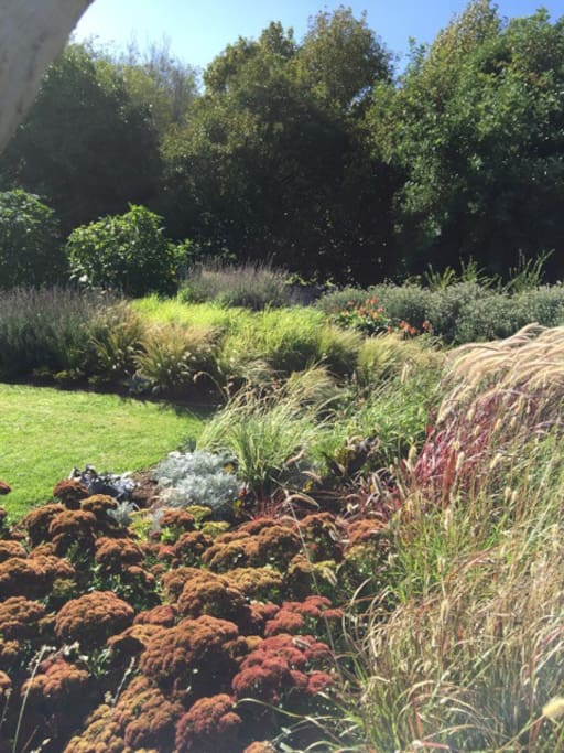 beautiful garden with grasses