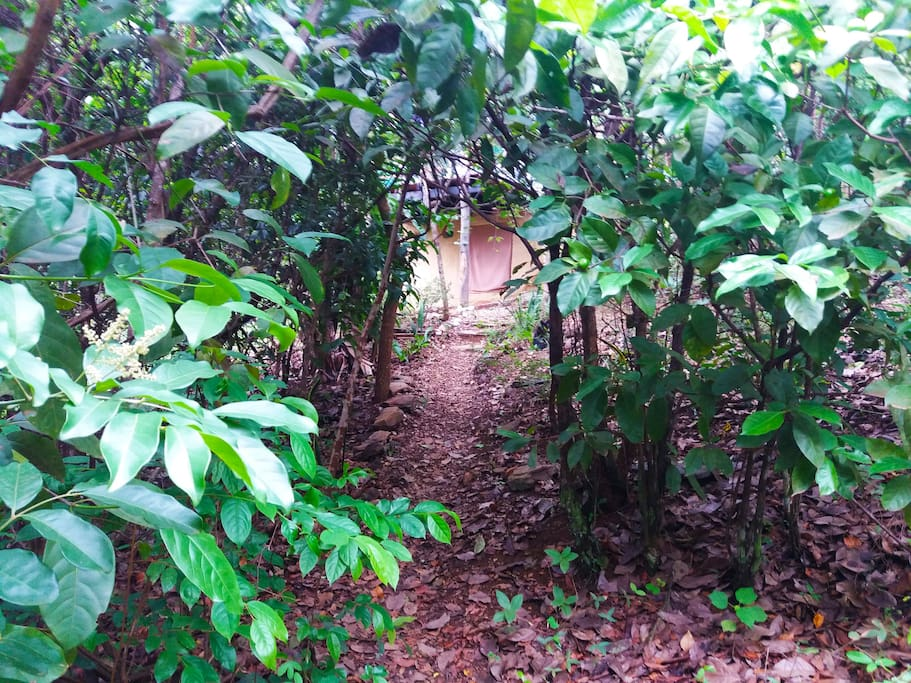 pequena trilha para chegar na casa