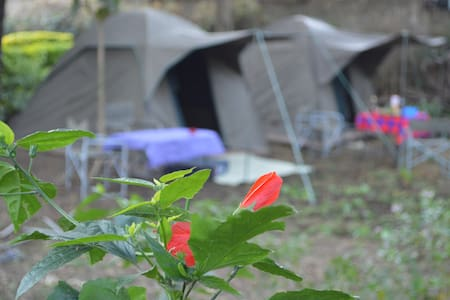 Tent in a beautiful and calm garden - Arusha - Telt