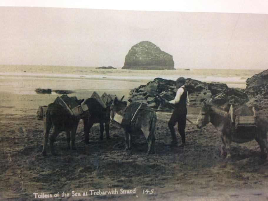 Trebarwith when The donkeys were used to carry sand from the beach to the Bluff.  Gull Rock has not changed much