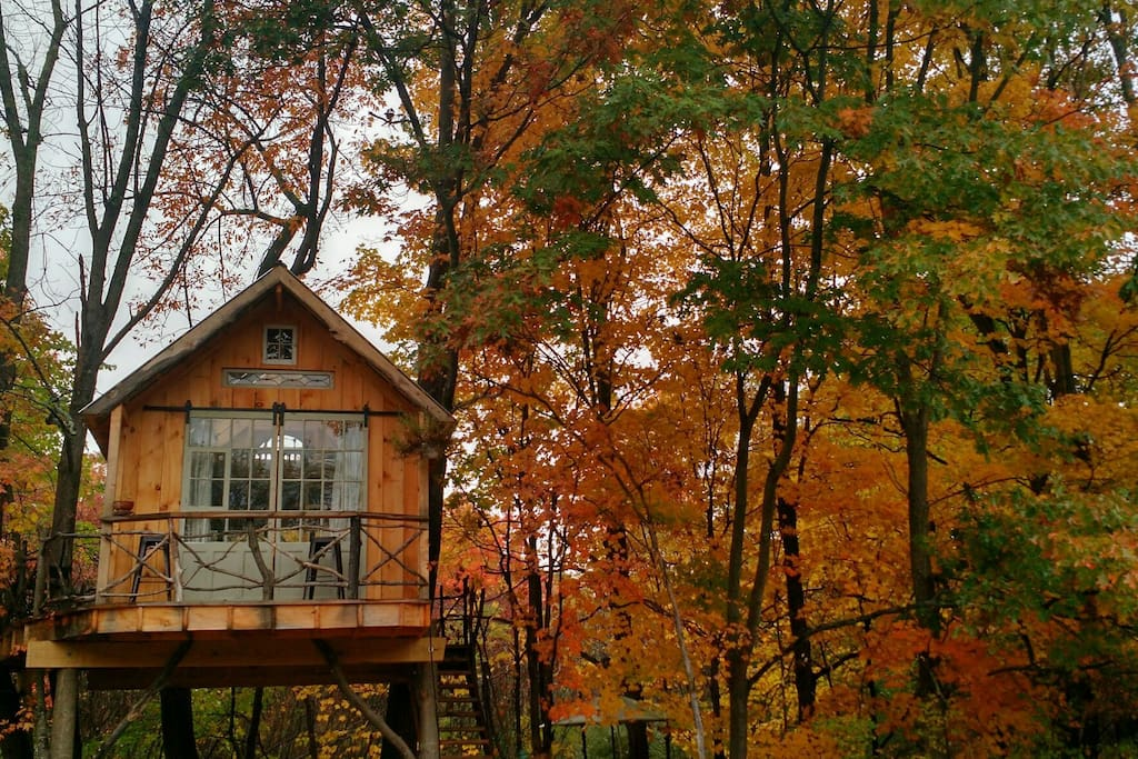 Breathtakingly beautiful fall colors surrounds the treehouse!