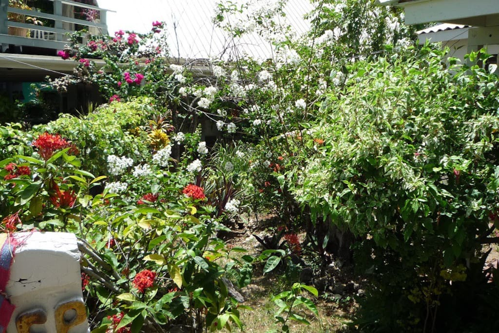 Garten Katty´s Paradise