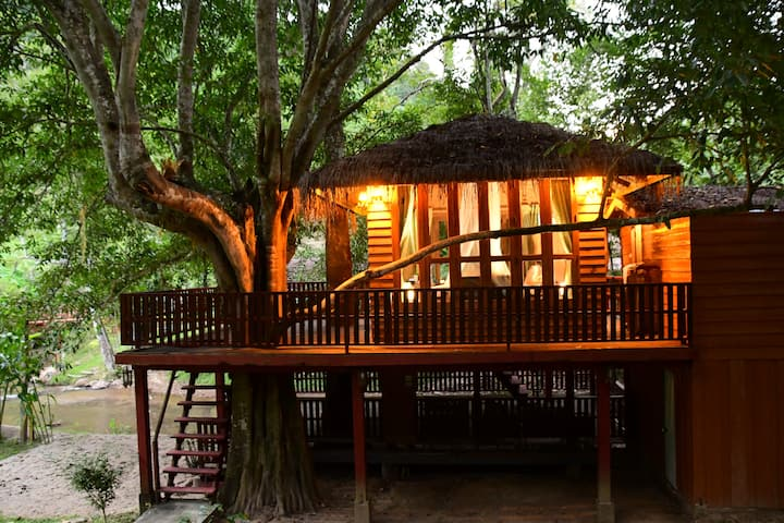 DreamCaught Treehouses - Treehouse
