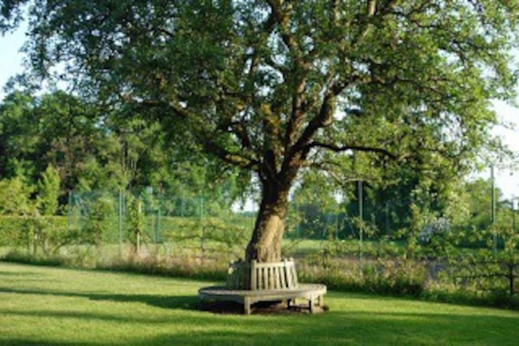 L'arbre centenaire et le tennis
