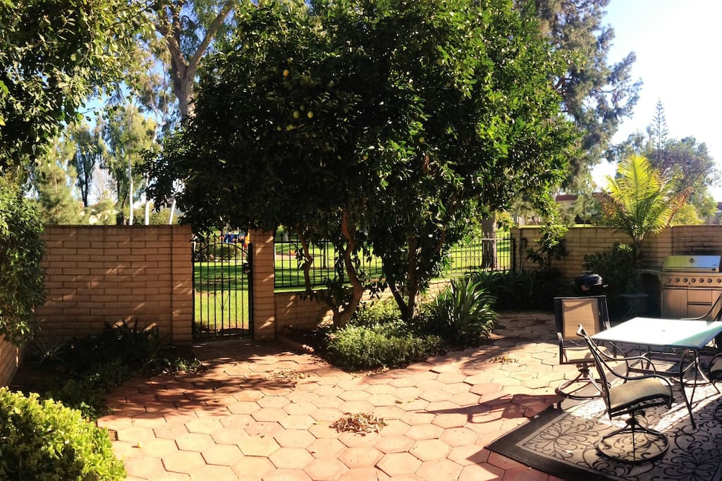 Backyard: Grill, seating, lemon and orange tree