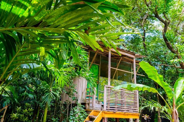 Casa Congo: Vibrant Jungle Treehouse w/ Gym