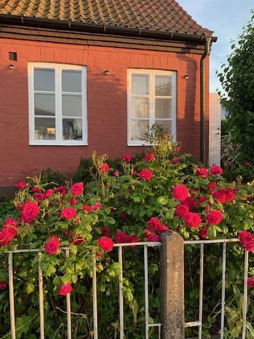 Rosenprakt vid entrén till huset