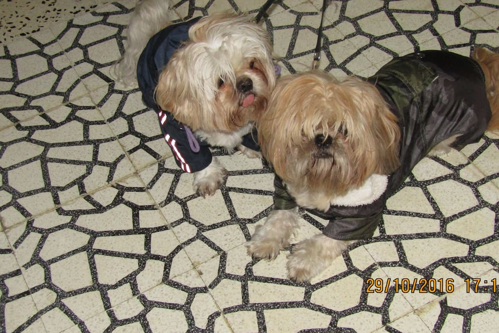 Our dogs Teddy and Harry
